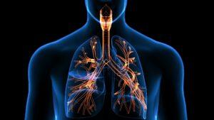 représentation du système respiratoires.